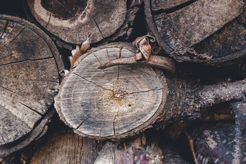 stack of firewood texture background