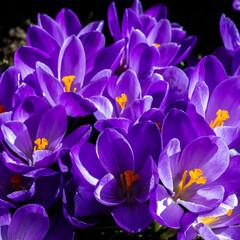 Obraz Wiosna i kwiaty - fototapety do salonu