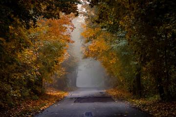 Jesienny las - fototapety na wymiar