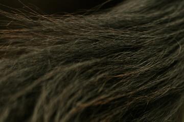 Fototapeta pelo de caballo obraz