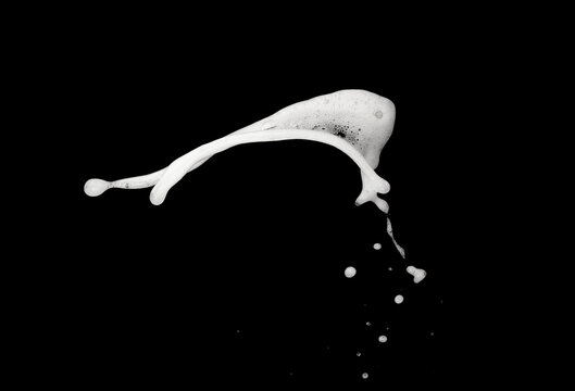 White bubble foam splash explosion in the air on black background,freeze stop motion photo object design