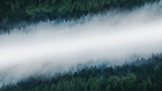 Misty Magical Symmetry Pine Forest Background