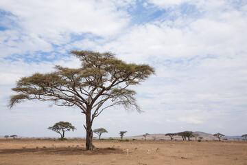 Obraz Serengeti National Park landscape, Tanzania, Africa - fototapety do salonu