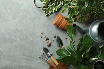 Fototapeta Concept of gardening on gray textured background obraz