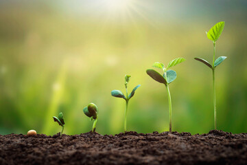 soybean growth in farm with green leaf background. agriculture plant seeding growing step concept