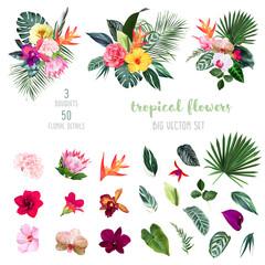 Fototapeta Exotic tropical flowers, orchid, strelitzia, hibiscus, protea, anthurium, palm, monstera obraz