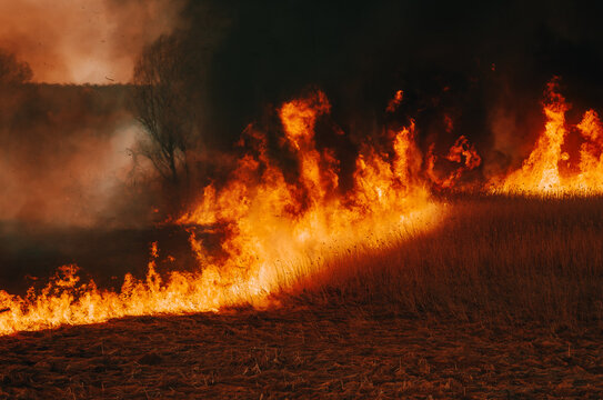 Burning dry grass, reed along lake. Grass is burning in meadow. Ecological catastrophy. Fire and smoke