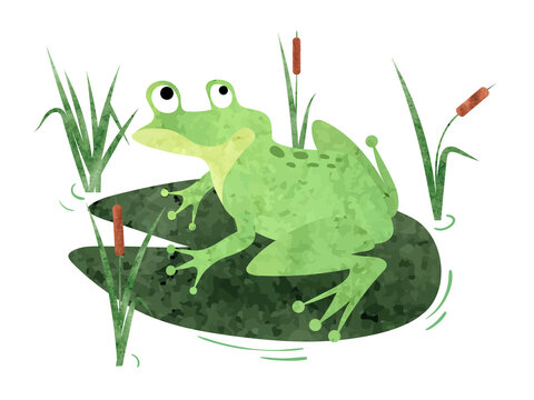 Cartoon Frog sitting on lily pad. Vector watercolor illustration.