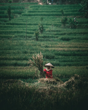 Farmers, To Be At The Forefront Of Ensuring Food Availability,  Sumedang, 11 August 2020