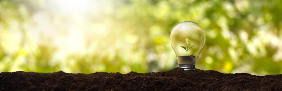 Light bulb with a plant inside - concept of environmental care and sustainable energy
