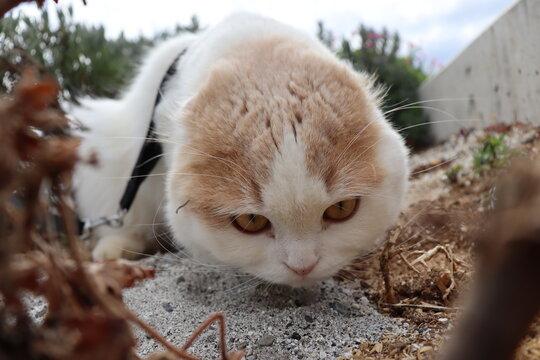 冒険する 猫と散歩
