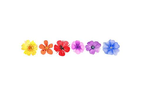 farbenfrohe Blüten, Aquarell auf Papier