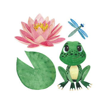 A set of watercolor illustrations with lotus leaves and flowers, a frog and a dragonfly