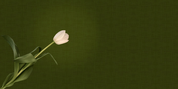 White Tulip on Mid Green Background. Hand Painted Digital Single Flower. Pattern Wallpaper with Copy Space