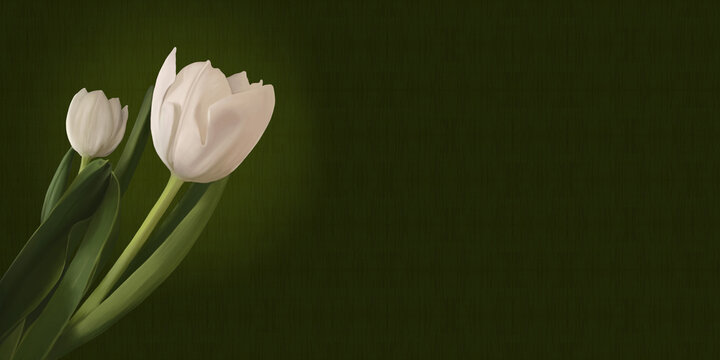 White tulips on green pattern background. Hand painted digital flowers with copy space.