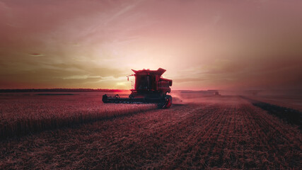 Fototapeta Mechanized harvesting of grain in an agricultural field. Bright, evening, summer landscape with a combine harvester at sunset. Idyllic rural background, wallpaper. Selective, soft focus. Tinted photo. obraz