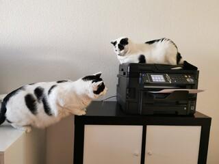 Obraz Katze stört wie Kinder im Corona Homeoffice  - fototapety do salonu
