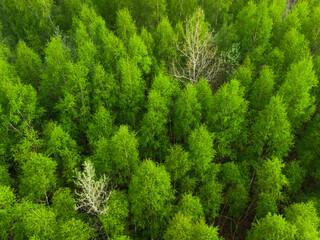 las w polsce