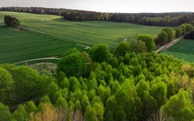 Na skraju lasu - fototapety na wymiar