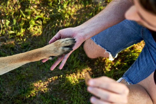 Top view of dog giving paw to male owner with piece of food while spending time in nature in summer during training