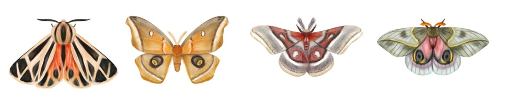 Set of watercolor moths. Bright butterflies isolated on white background.