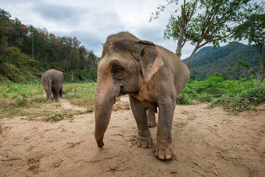 Elephants with gray skin standing on rough terrain against ridges with green trees under cloudy sky in Thailand