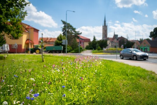 Row of local flowers planted to help bees. Eco friendly way how to help insect in the cities.