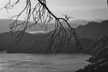 Grayscale shot of a tree twig with the sea and landscapes on the background