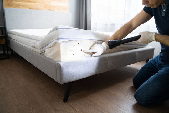 Bed Bug Infestation And Treatment Service