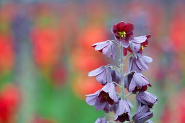 Obraz Piękny fioletowy kwiatek na zielono czerwonym tle.  - fototapety do salonu