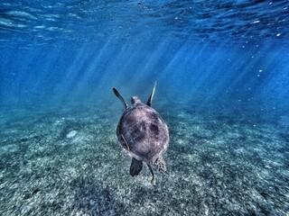 Sea turtle with sun rays