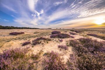 Enchanting landscape scenery of heathland