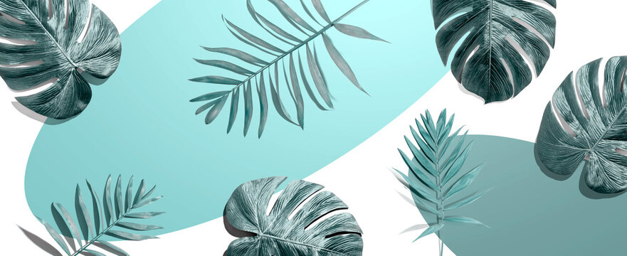 Tropical palm leaves from above