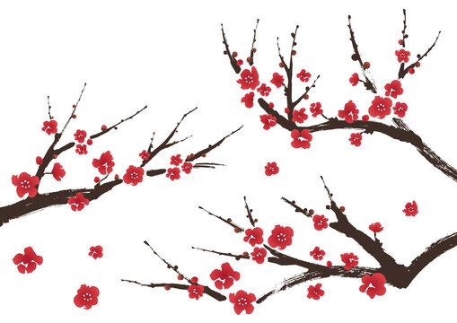 梅の枝(紅梅)