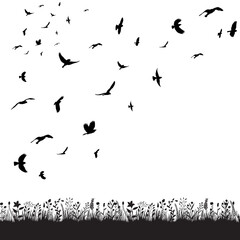 vector, isolated, a flock of birds flies in nature