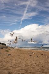 Niebo chmury Morze ptaki plaża