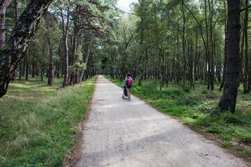 Obraz Droga las Słowiński Park Narodowy - fototapety do salonu