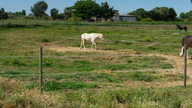 Horse resting behind the fence in a field in Barcelona.