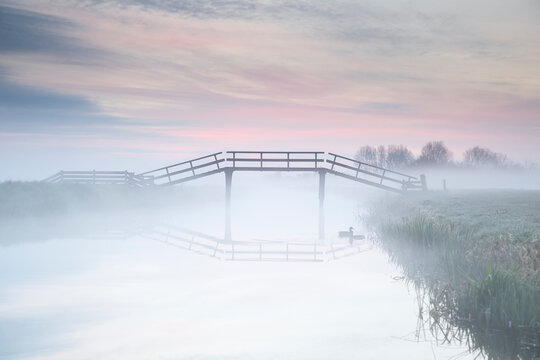 duck and wooden bridge in dense fog at dawn