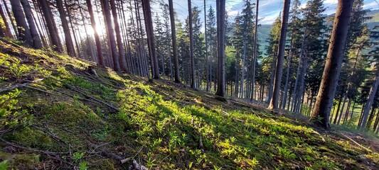las w górach - fototapety na wymiar