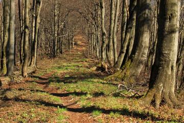 Leśna aleja