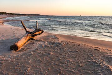 Morze bałtyckie Korzeń konar pień plaża zachód słońca