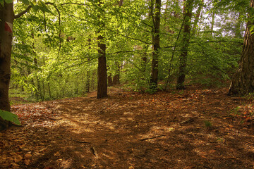 las po deszczu - fototapety na wymiar