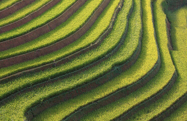 terraces rice field At Mu cang chai, Vietnam, The time when the green field was a curved field. And there was light shining on the field