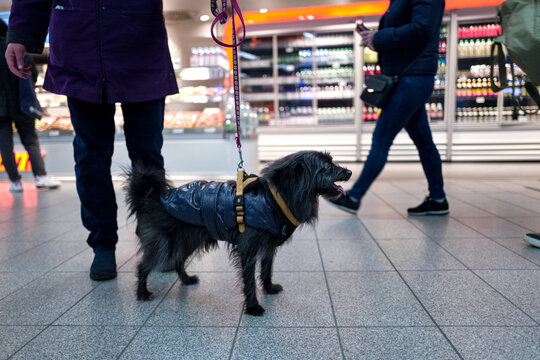 Low Section Of People Walking With Dog On Tiled Floor In Supermarket
