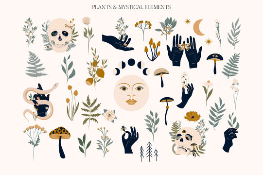 Set of mystical elements and flower, herb and plants. Editable vector clipart illustration.
