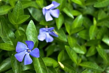 Fototapeta Piękne, kolorowe kwiaty na zielonym tle łąki. obraz