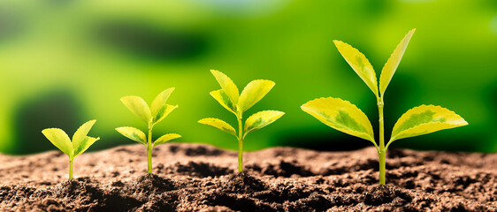 Growing plant, earth day, environmental concept