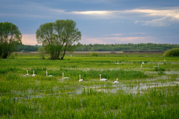 Biebrza, Biebrzański Park Narodowy, Podlasie, Polska