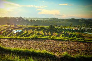 rice terrace fields in the morning
